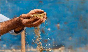 مزارعو القمح يستعدون للتصعيد