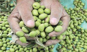 مصلحة الليطاني: لإلزام معاصر الزيتون احترام الشروط البيئية