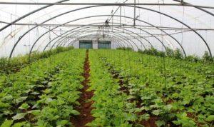 الانتاج الزراعي في لبنان بين 2010 و2014: ينمو بمعدل سنوي مركّب نسبته 8%