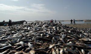 دهم مركز للصيد البحري في الزهراني