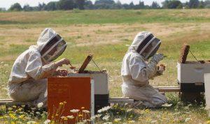 مشروع «LIVCD»: إنتاج العسل يزداد وكذلك عدد المربين والصادرات تتضاعف