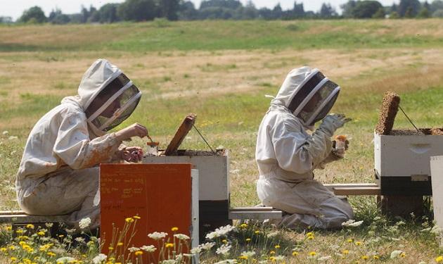 Researchers-Testing-HoneyBees-US