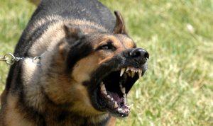 إحذروا الكلاب الشاردة.. في صور!