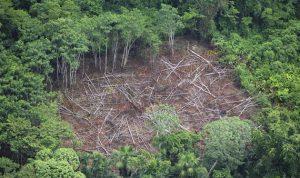 الأمازون ستخسر حوالى نصف غاباتها في 2050