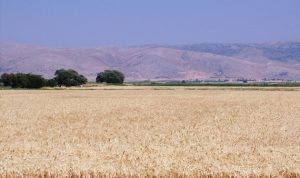 إقرار مستحقات مزارعي القمح في البقاع