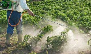 رش المبيدات في صور: الناس قلقون