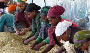 إثيوبيا تدخل 2016 من باب التحول الاقتصادي الصعب