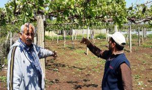 عكار: ارتياح لقرار منع إدخال المنتجات الزراعية من سوريا