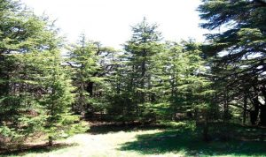 وزارة البيئة: في اليوم الوطني للمحميات الطبيعية الدخول مجاني