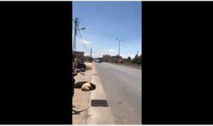 """بالفيديو: استقبال المصري على وقع الرصاص والـ """"ب 7"""" في حورتعلا"""