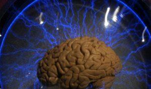 علماء يكتشفون أنابيب في الدماغ تخلصه من السموم
