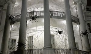 بالصور… العناكب تغزو البيت الأبيض!