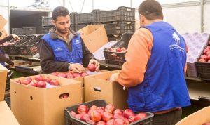 مؤسسة رينيه معوض تساعد مزارعي التفاح على تصريف محصولهم إلى روسيا