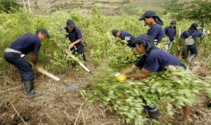 الأمم المتحدة تكافح الجوع بمساعدة حارسات البذور الأصليات