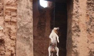 بالصورة والفيديو… كلبٌ مشنوق في بلدة شحور