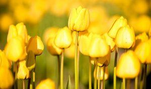 طقس ربيعي ودافئ في الأيام المقبلة