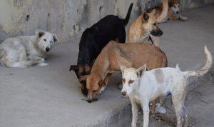 وزارة الصحة: الكلاب الشاردة مسؤولية البلديات