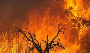 في أستراليا.. الحرائق تلتهم الغابات وإجلاء عشرات الآلاف