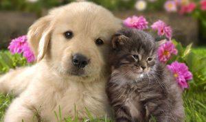 الكلاب تسعد أصحابها أكثر من القطط