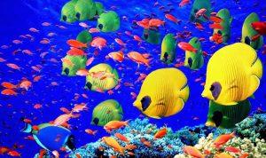السمك… لعلاج السكري!