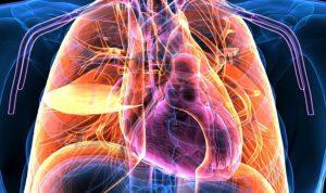 اكتشاف عضو جديد في جسم الإنسان!