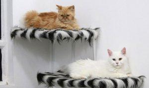 بالصور… فندق لتدليل القطط مقابل 4.2 $ لليلة واحدة