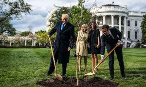 أين اختفت الشجرة التي زرعها ماكرون وترامب في البيت الأبيض؟