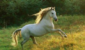 حصانٌ روسيّ أبيض إلى البيت الأبيض