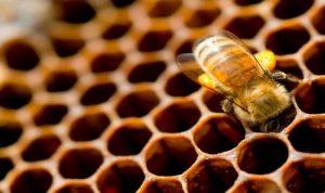 النحل والكسل لا يجتمعان.. اليكم سر النشاط
