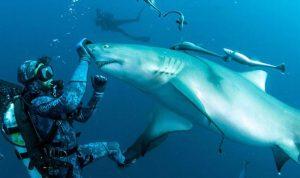 بالصور: غواص ينوّم أسماك القرش مغناطيسياً