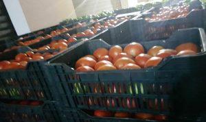 بندورة مهربة… في سوق قب الياس