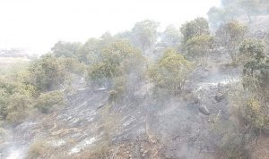 """2000 متر من الأشجار """"اختفت"""" في وادي الزواريب… بسبب حريق!"""
