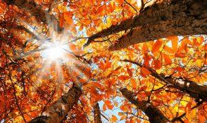 الخريف مليء بألذّ المأكولات وأنفعها