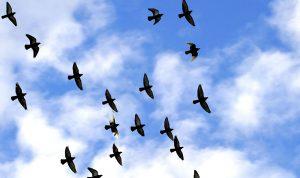 رحلة للصيادين من دون بنادق على ممر الطيور المهاجرة
