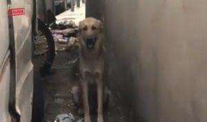 بالفيديو: الكلاب في بيروت.. أينتظرها مصيرٌ أفضل؟