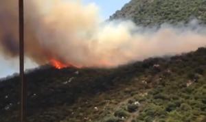 الدفاع المدني: محاولات إخماد حريق أحراج لحفد وحاقل مستمرة