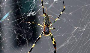 اليكم سرّ قوة شباك العنكبوت