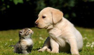 نقابة الأطباء البيطريين تحذر من استخدام المعقمات على الحيوانات
