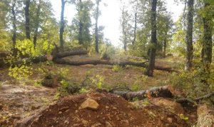 في قرى القيطع… انقطاع الكهرباء وأضرار كبيرة في الأشجار
