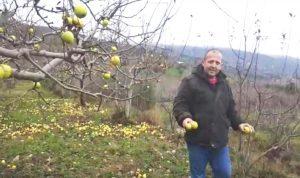 مزارعو التفاح في عكار يطالبون بتعويضهم
