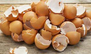 اليكم مزايا تناول قشر البيض