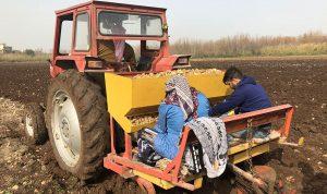 مزارعو البطاطا: لتحديد الكمية المستوردة من مصر