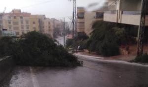 إزالة شجرة عملاقة أسقطتها العاصفة في صيدا