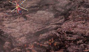 بالفيديو والصور: قتلى و300 مفقودإثر انهيار سدّ في البرازيل