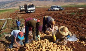 نقابة العمال الزراعيين: الوضع لا يحتمل الإهمال أو المماطلة