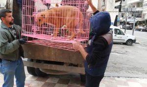 حملة لمعالجة مشكلة الكلاب الشاردة في صور