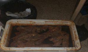في الضاحية… مواد غذائية تعشعش فيها الجرذان والحشرات (بالصور)