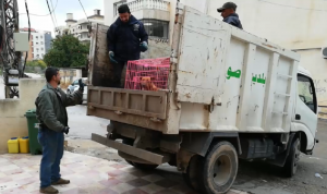 بلدية صور واصلت التقاط الكلاب الشاردة