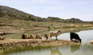قوة إسرائيلية فشلت في خطف راع في جبل الشحل