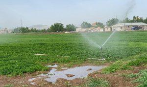فضيحة بالصور: ري المزروعات بمياه الصرف الصحي في بر الياس!